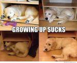 growing-up-sucks-dog-meme