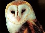 owl-totem-300