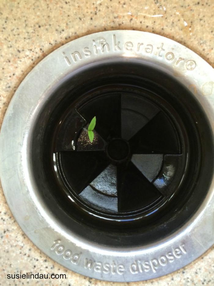 plant in insinkerator
