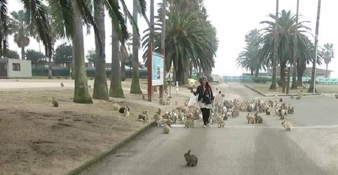 bunny-stampeded