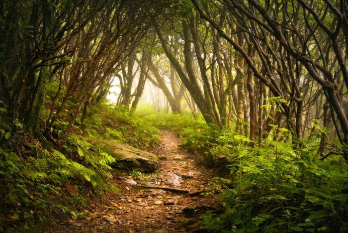 appalachian-hiking-trail--blue-ridge-mountains-forest-fog-nature-landscape-dave-allen